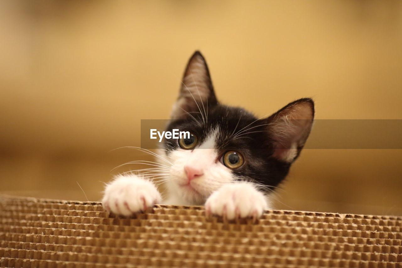 Close-Up Portrait Of Kitten In Basket