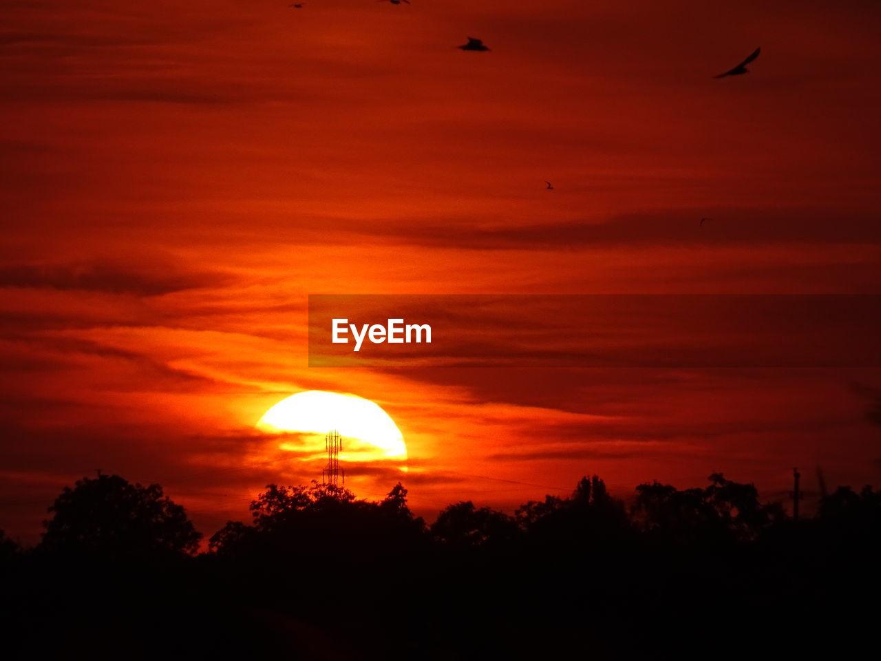 Silhouette Bird Against Orange Sky