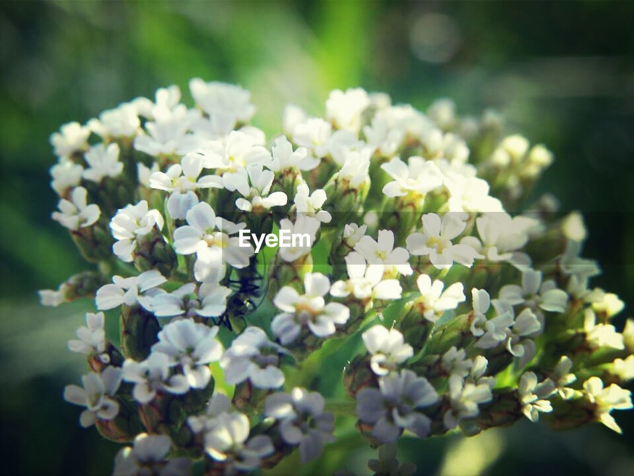 flower, nature, growth, plant, beauty in nature, spring, blooming, fragility, freshness, outdoors, no people, day, close-up, flower head