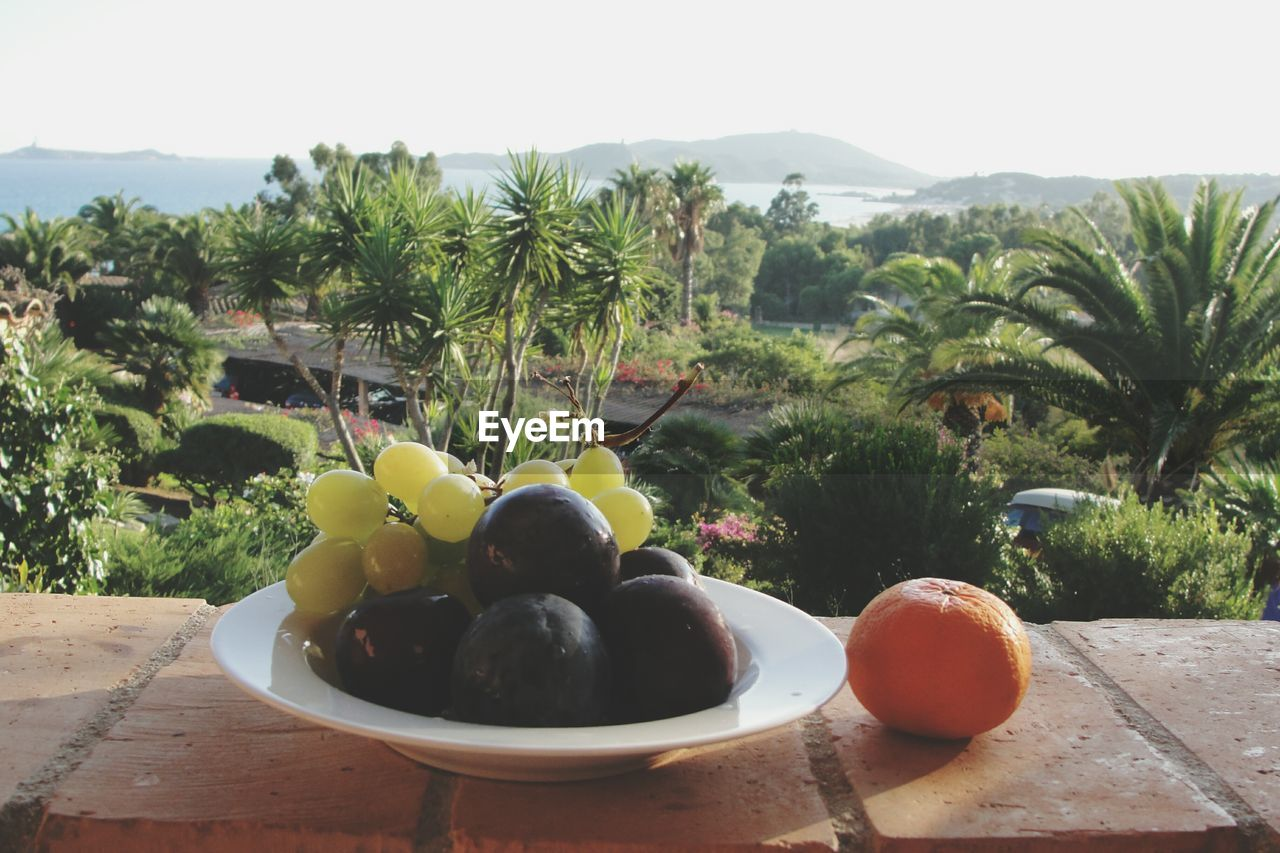 Fruits in plate on retaining wall against trees