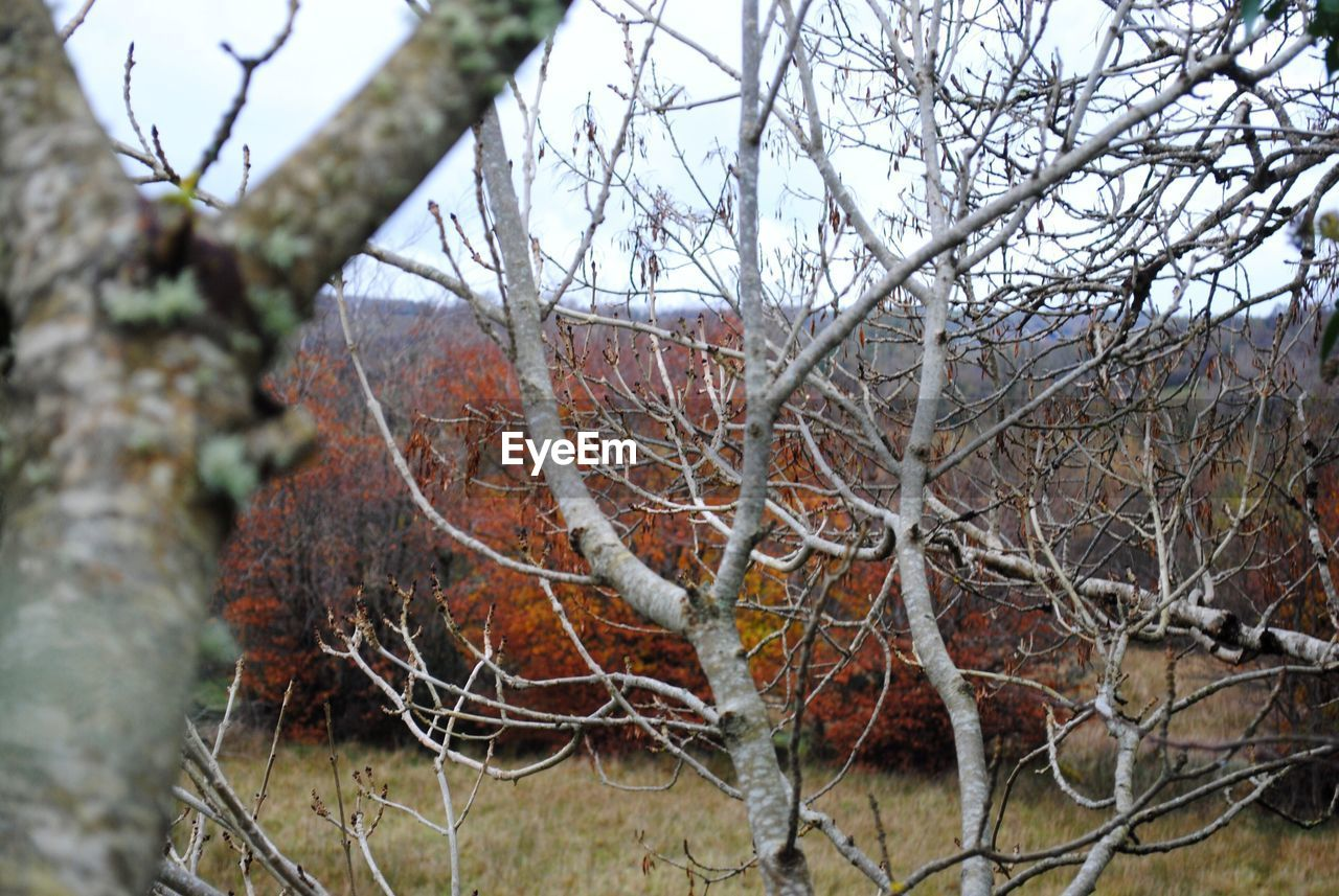 branch, day, bare tree, nature, tree, no people, outdoors, beauty in nature, tranquility, close-up, dried plant, dead tree, sky