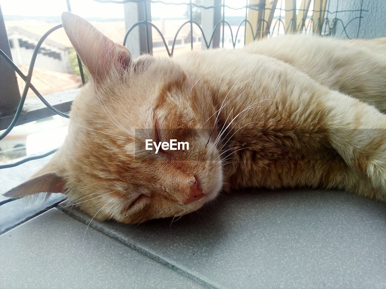 pets, one animal, domestic animals, domestic cat, mammal, animal themes, relaxation, sleeping, resting, eyes closed, feline, no people, lying down, day, close-up, indoors
