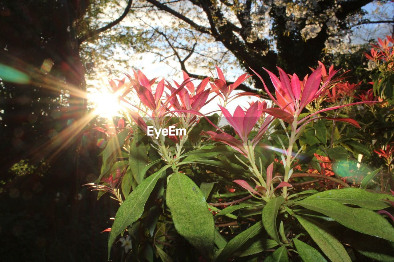 growth, nature, sun, leaf, beauty in nature, sunlight, no people, tree, plant, flower, outdoors, freshness, day, fragility, close-up