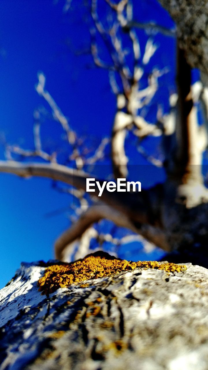 tree, plant, selective focus, nature, close-up, branch, no people, blue, beauty in nature, growth, day, outdoors, sky, tree trunk, trunk, yellow, sunlight, lichen, textured, wood - material, bark
