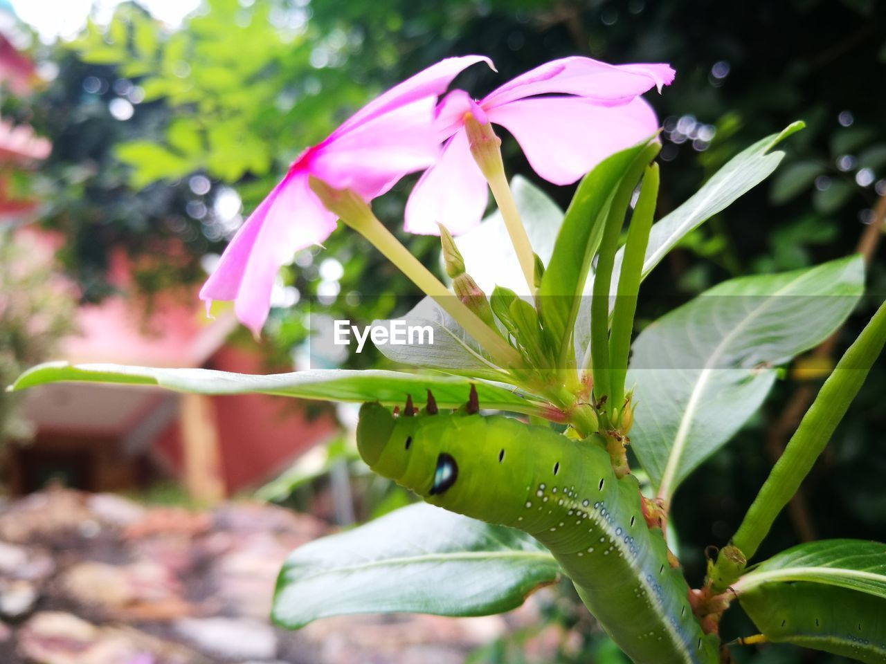 growth, flower, focus on foreground, nature, fragility, petal, day, plant, freshness, no people, outdoors, beauty in nature, close-up, leaf, flower head
