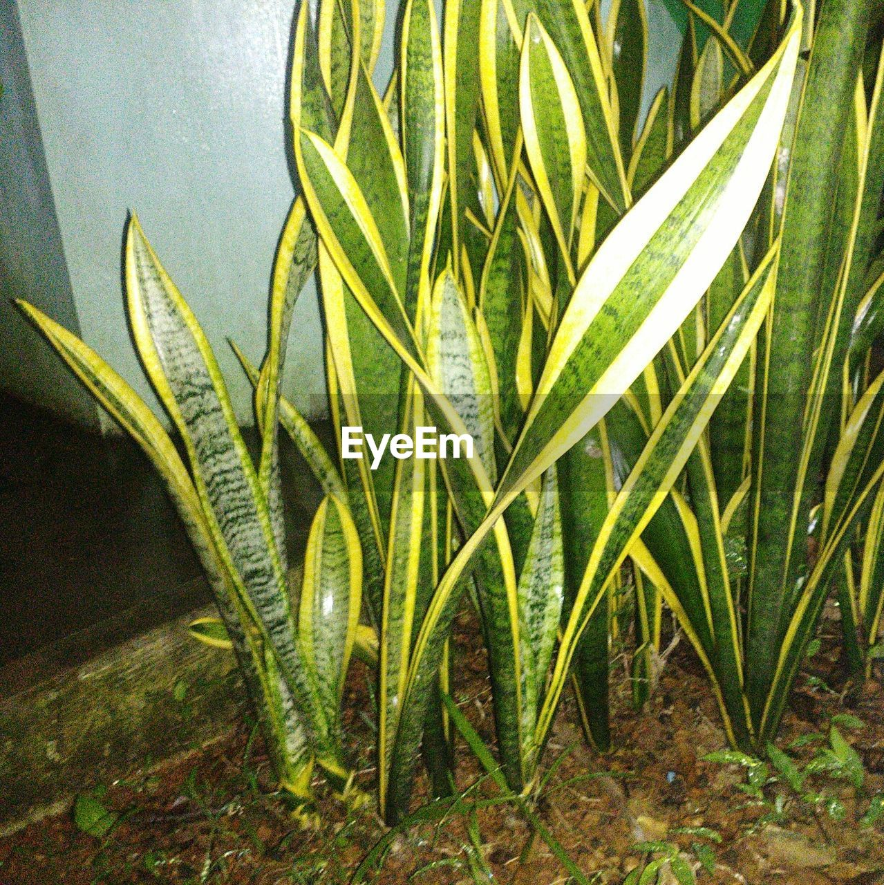 growth, leaf, green color, plant, nature, beauty in nature, no people, close-up, day, outdoors, fern, freshness, water, grass