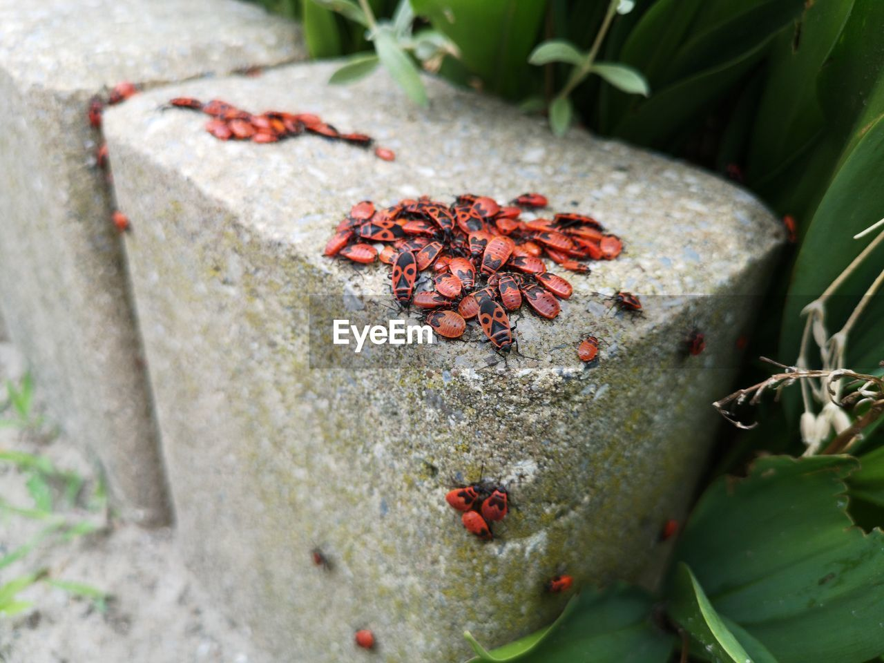 HIGH ANGLE VIEW OF RED BERRIES ON CONCRETE