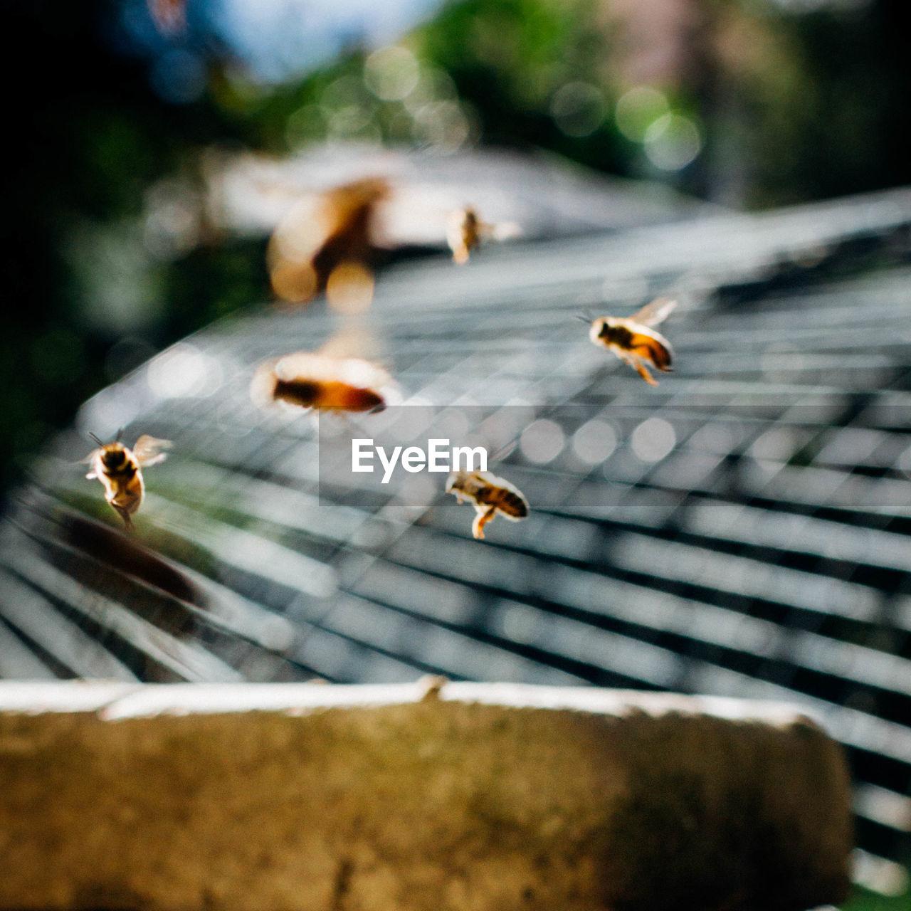 Close-up of honey bees flying at park