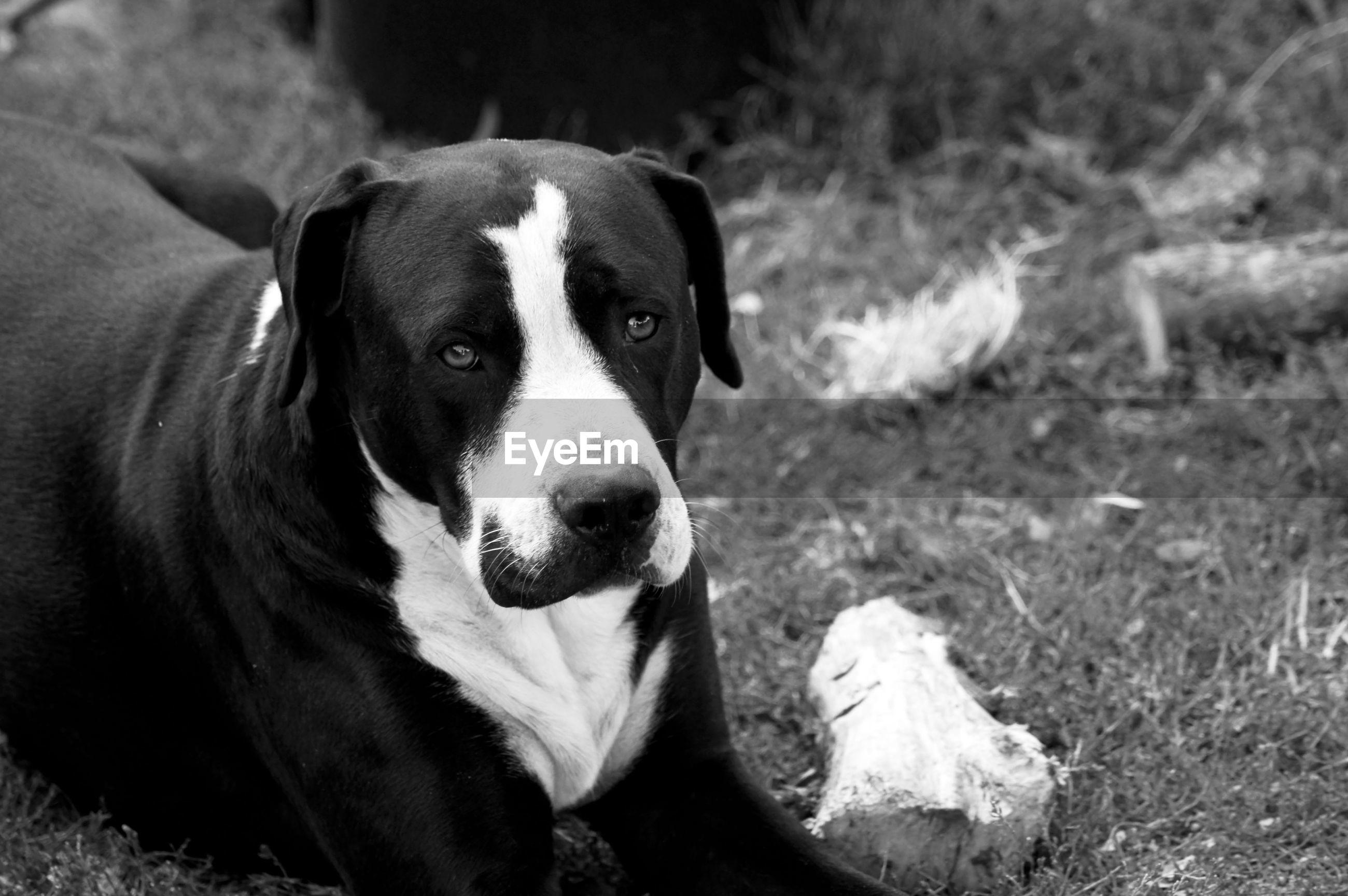 HIGH ANGLE VIEW OF DOG SITTING