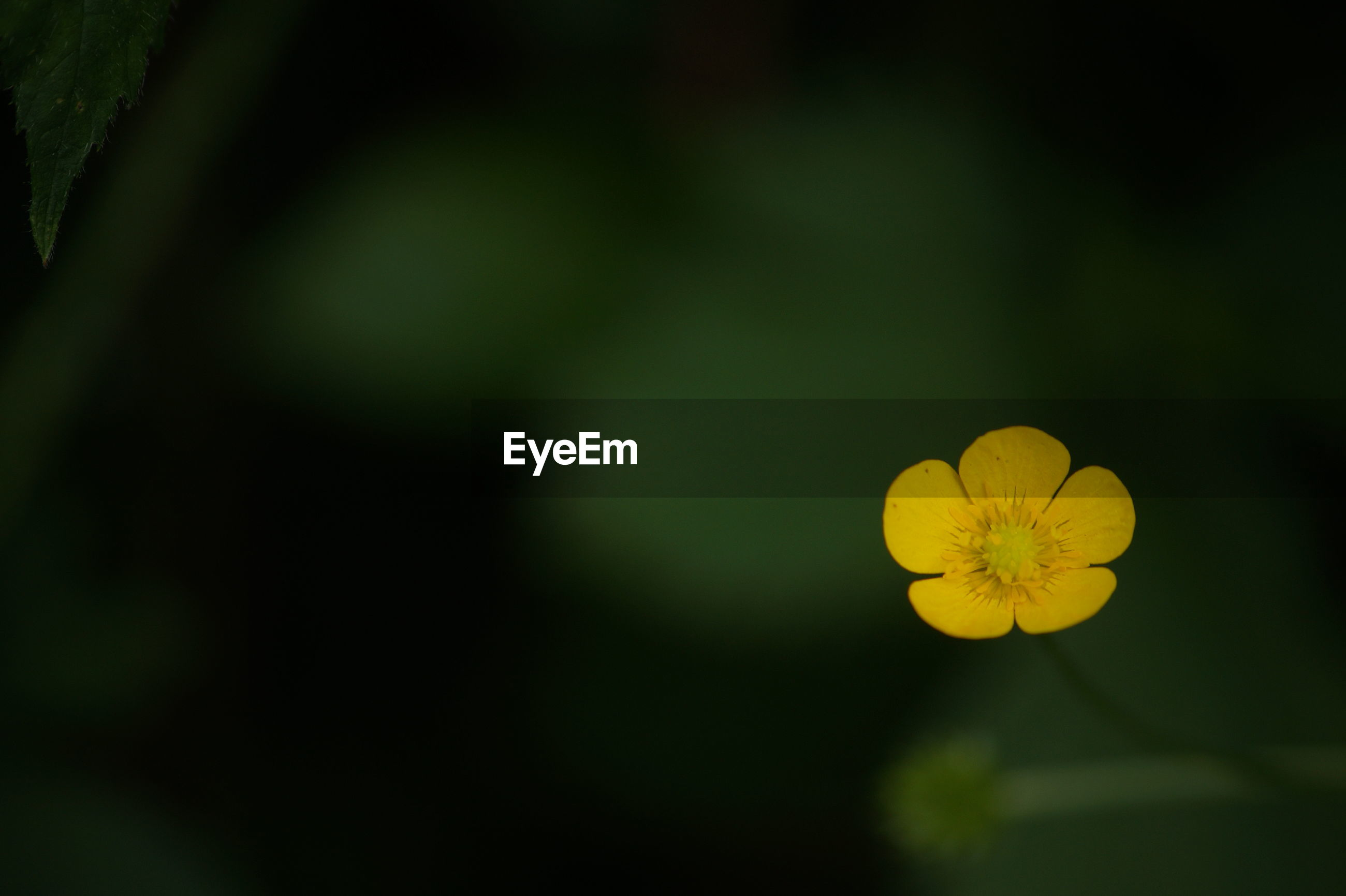 yellow, flower, beauty in nature, growth, nature, fragility, petal, freshness, plant, flower head, no people, day, outdoors, close-up