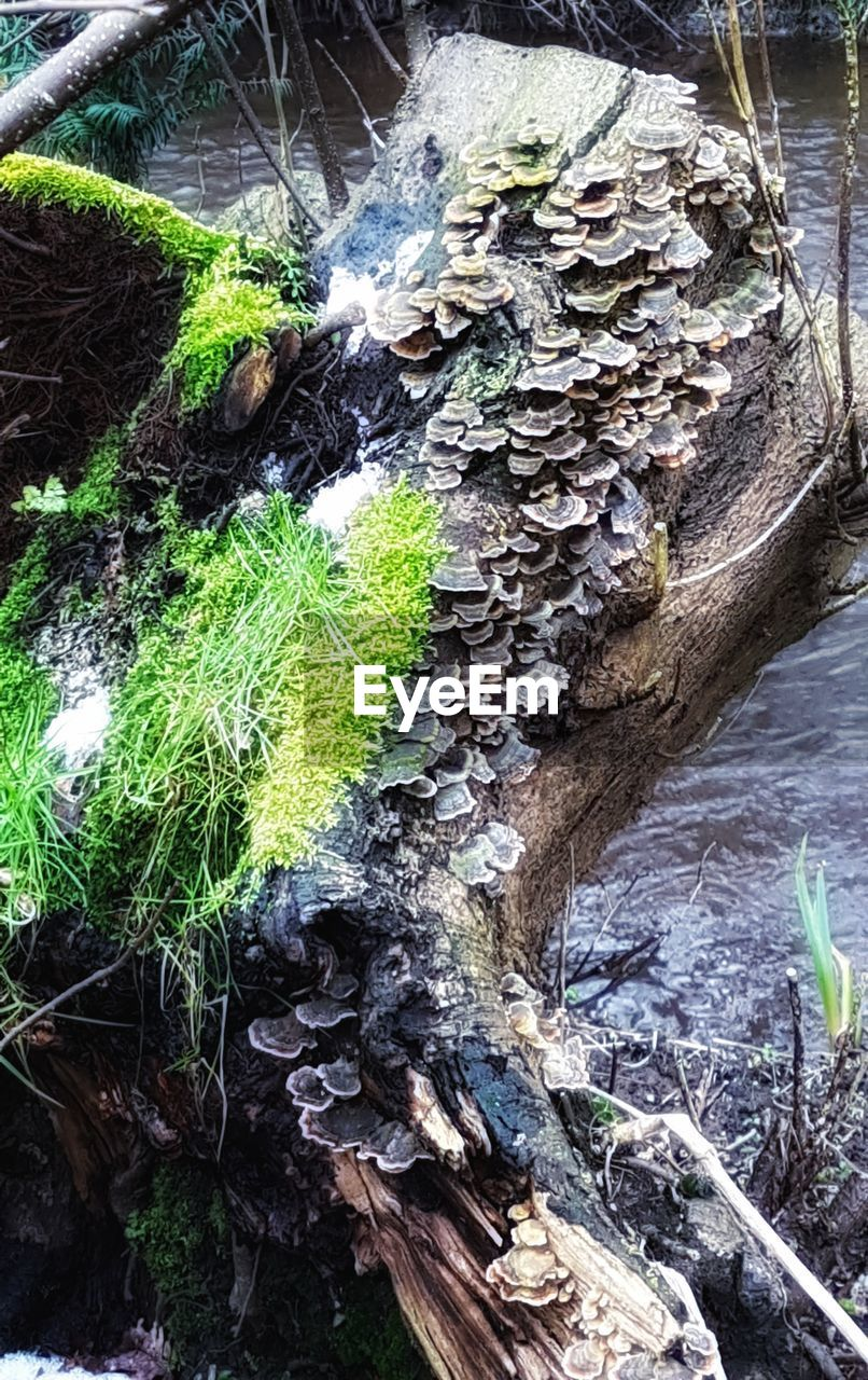 high angle view, day, outdoors, nature, no people, tree trunk, beauty in nature, water, tree, close-up