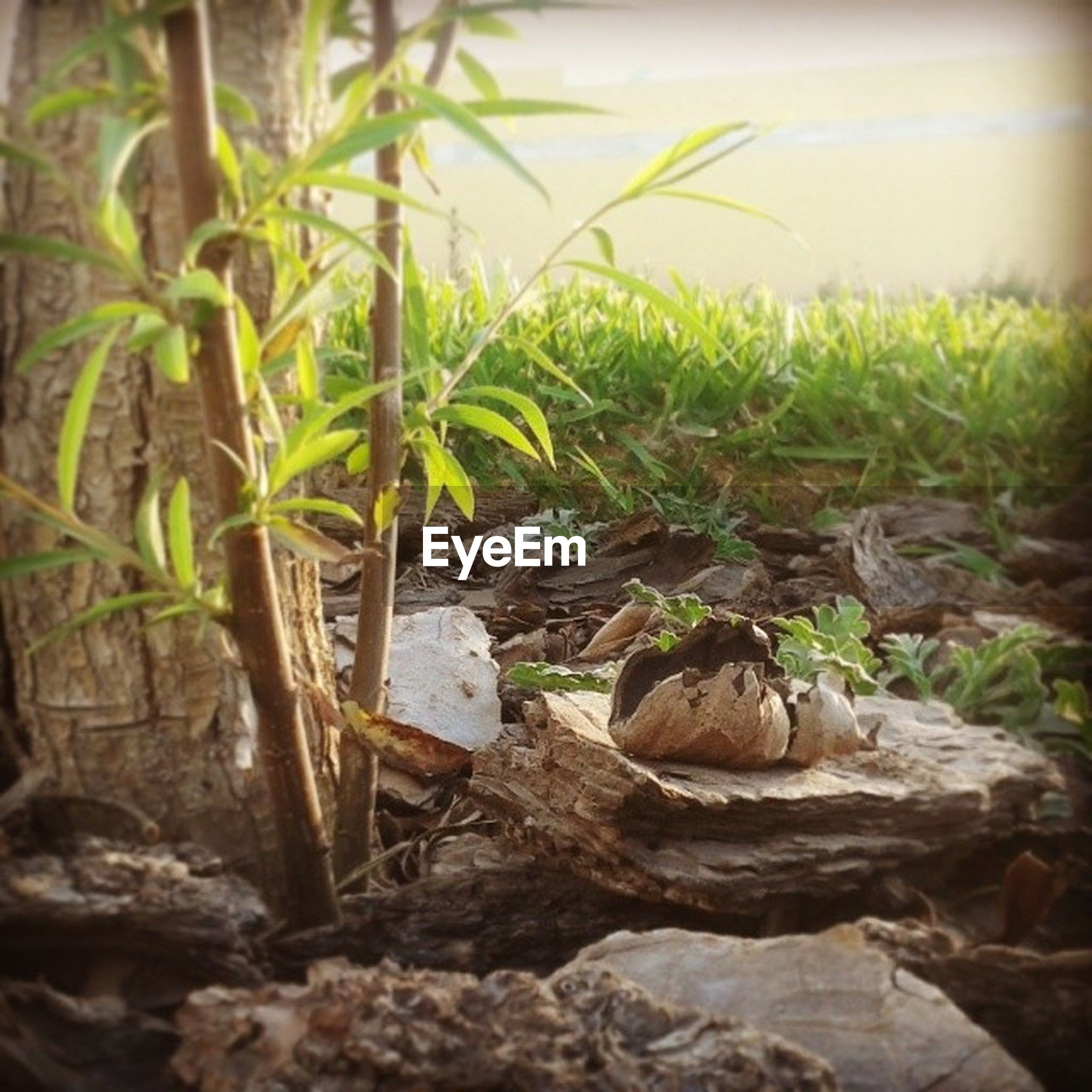 plant, rock - object, growth, abandoned, wood - material, nature, green color, selective focus, sunlight, day, no people, damaged, leaf, obsolete, outdoors, field, stone - object, close-up, dirt, tranquility