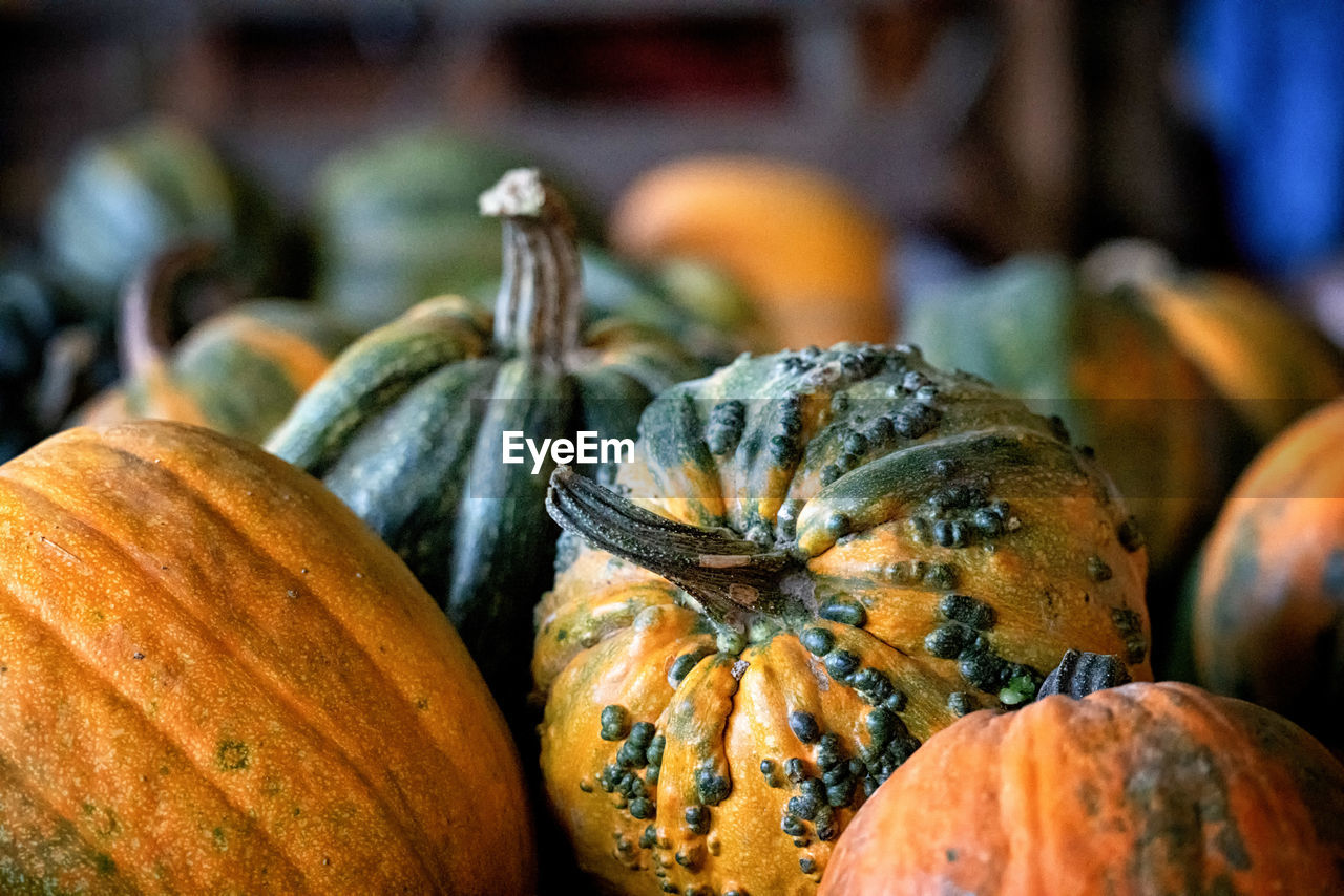 food and drink, food, healthy eating, pumpkin, wellbeing, freshness, still life, close-up, vegetable, no people, focus on foreground, gourd, market, indoors, day, squash - vegetable, orange color, for sale, large group of objects, raw food, ripe