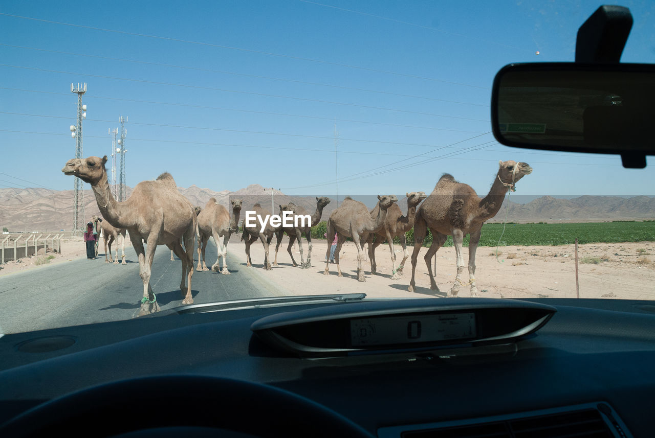 car, transportation, vehicle interior, land vehicle, car interior, mode of transport, windshield, mammal, car point of view, steering wheel, road, road trip, travel, animal themes, day, dashboard, no people, nature, domestic animals, sky, outdoors