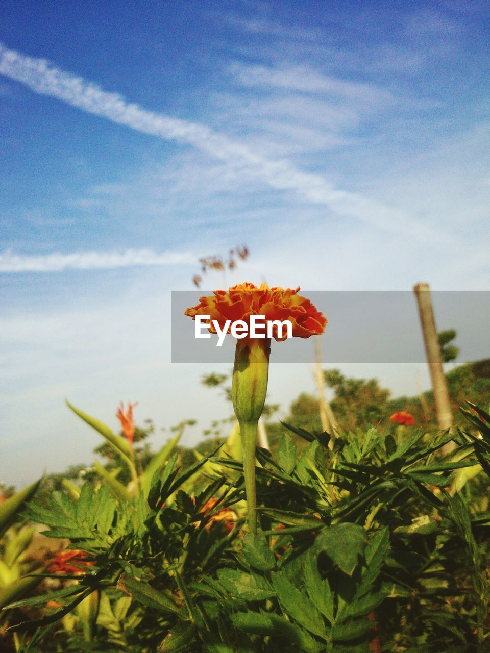 flower, growth, petal, nature, plant, beauty in nature, fragility, freshness, flower head, field, no people, outdoors, close-up, day, blooming, red, sky, poppy