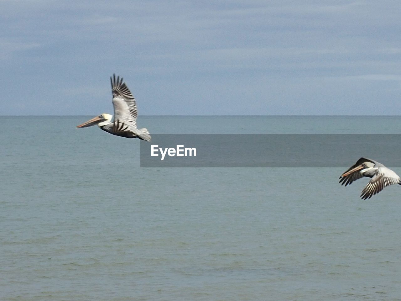 flying, spread wings, bird, animals in the wild, animal themes, sea, water, mid-air, nature, animal wildlife, motion, one animal, beauty in nature, horizon over water, day, seagull, outdoors, no people, scenics, sky