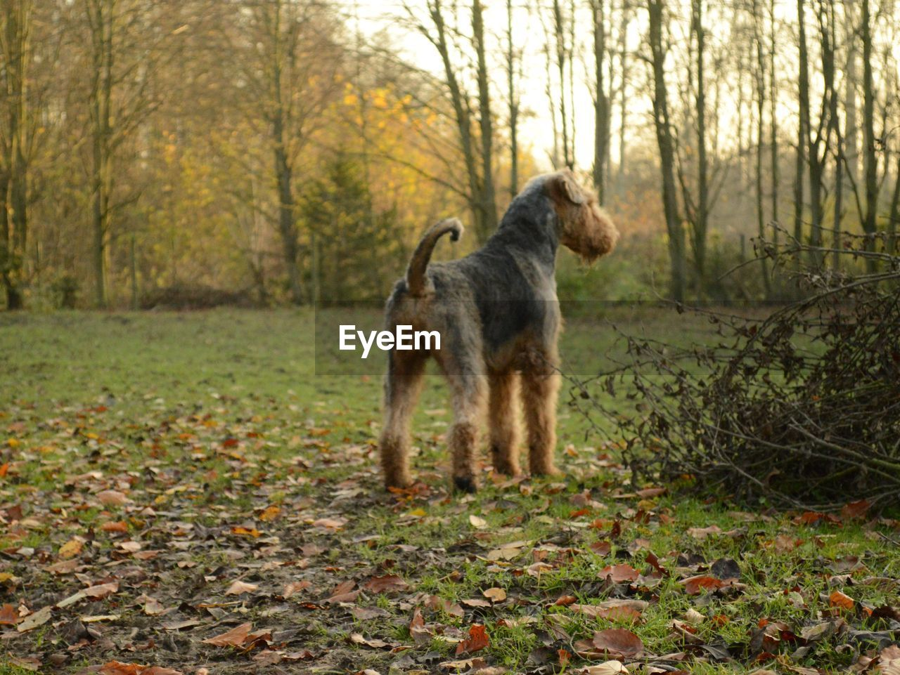 Dog standing on grassy field in forest