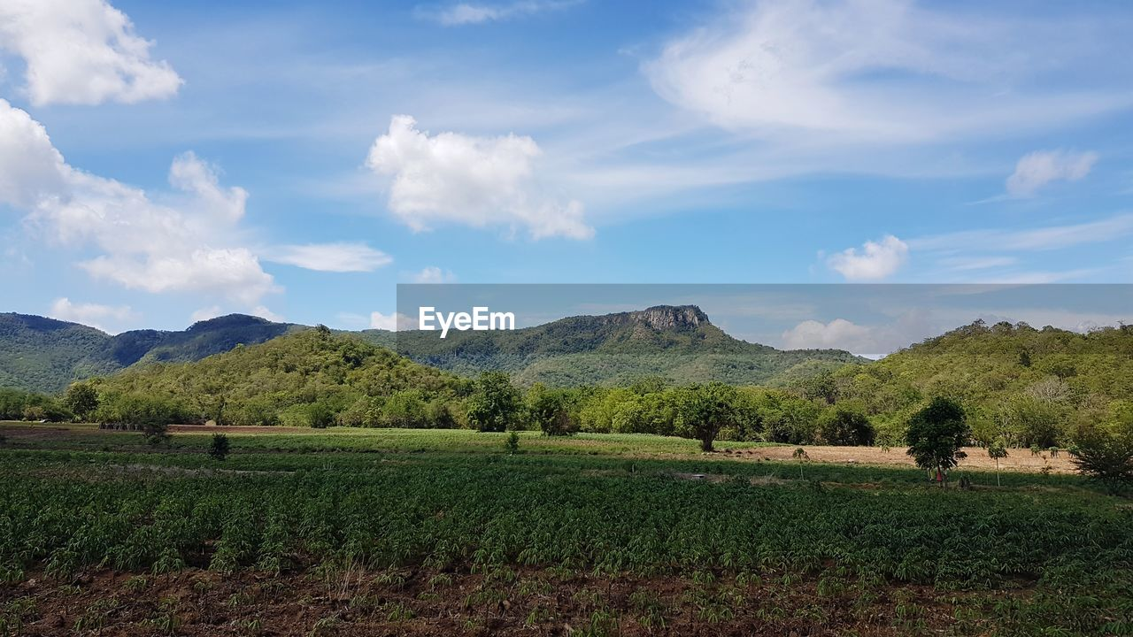 sky, scenics - nature, landscape, beauty in nature, cloud - sky, environment, plant, tranquil scene, land, mountain, field, tranquility, growth, nature, tree, agriculture, day, green color, rural scene, no people, mountain range, outdoors, plantation, winemaking