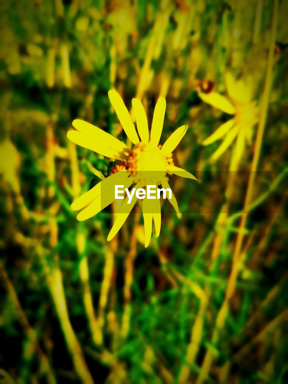 flower, nature, petal, growth, beauty in nature, fragility, plant, yellow, flower head, freshness, close-up, outdoors, day, no people, blooming