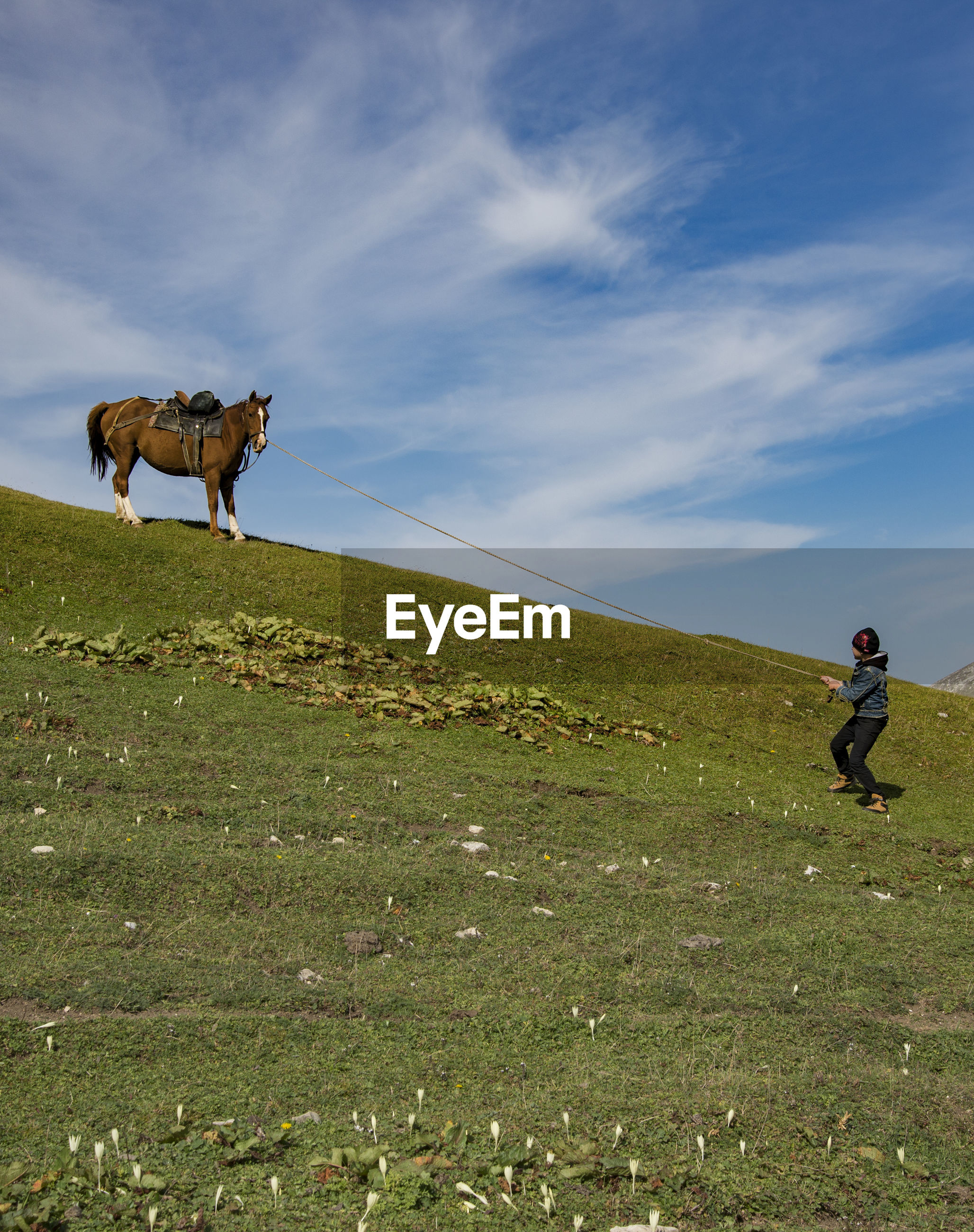 MAN AND HORSE ON FIELD BY LAND