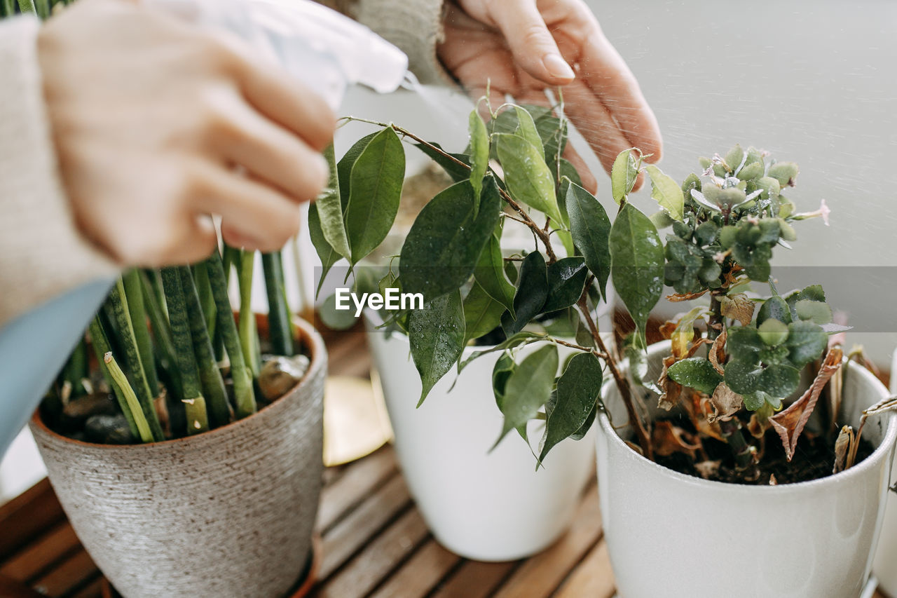 MIDSECTION OF PERSON HOLDING POTTED PLANT