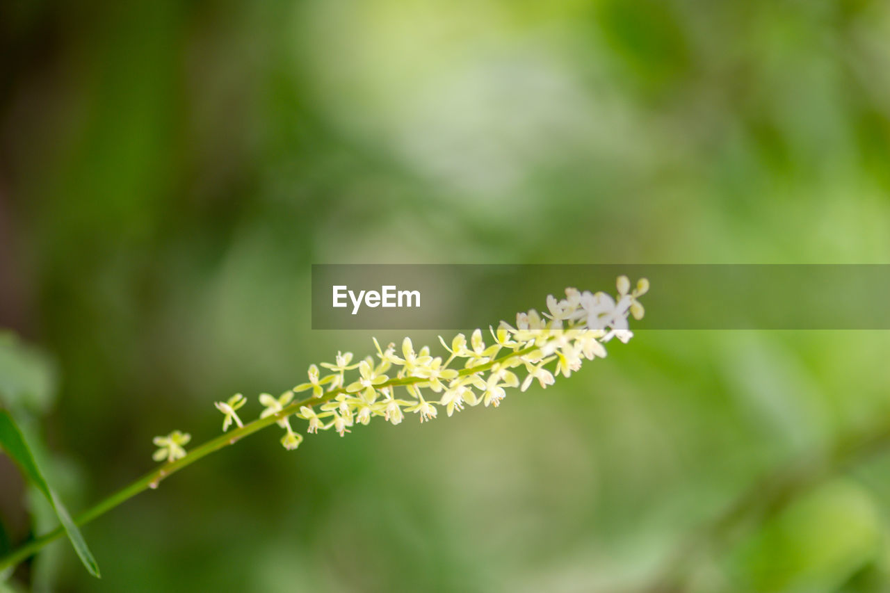 plant, growth, beauty in nature, flower, fragility, close-up, vulnerability, flowering plant, freshness, green color, nature, no people, focus on foreground, day, selective focus, tranquility, outdoors, petal, plant part, leaf, flower head