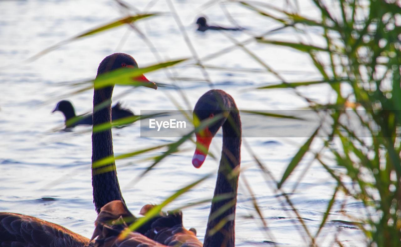 CLOSE-UP OF A BIRD ON A LAKE
