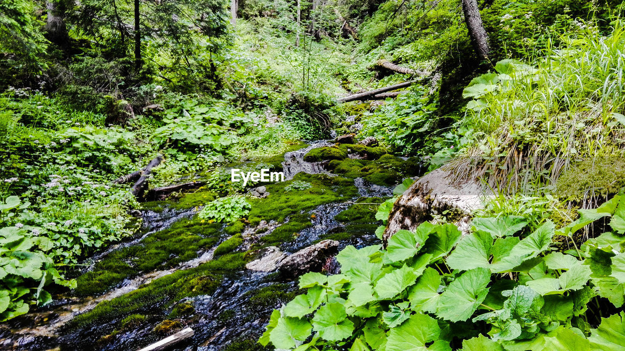 nature, forest, beauty in nature, tranquility, tranquil scene, water, green color, no people, scenics, green, outdoors, growth, idyllic, day, river, moss, lush foliage, plant, tree, leaf, waterfall, travel destinations