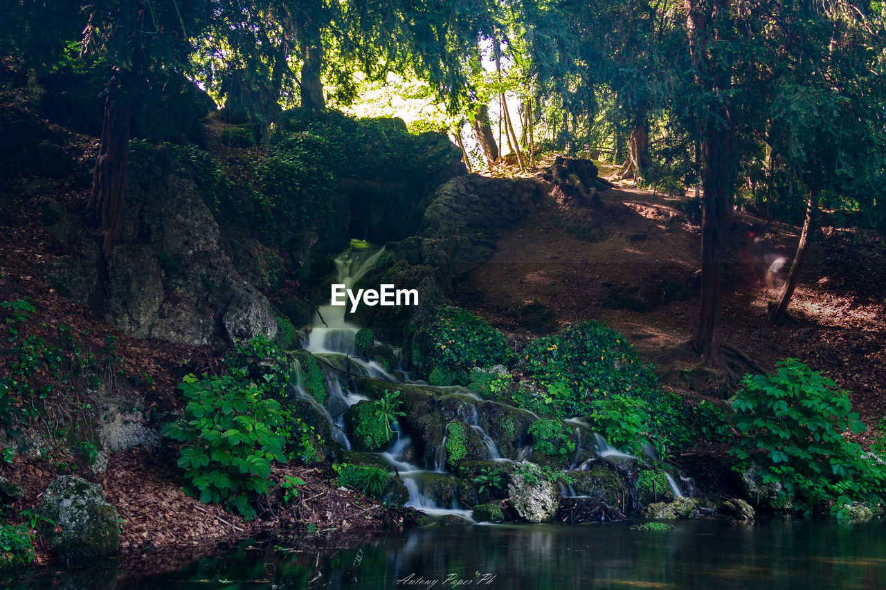tree, water, scenics - nature, plant, forest, beauty in nature, waterfall, tranquility, land, nature, long exposure, rock, flowing water, no people, growth, motion, non-urban scene, day, rock - object, rainforest, outdoors, flowing