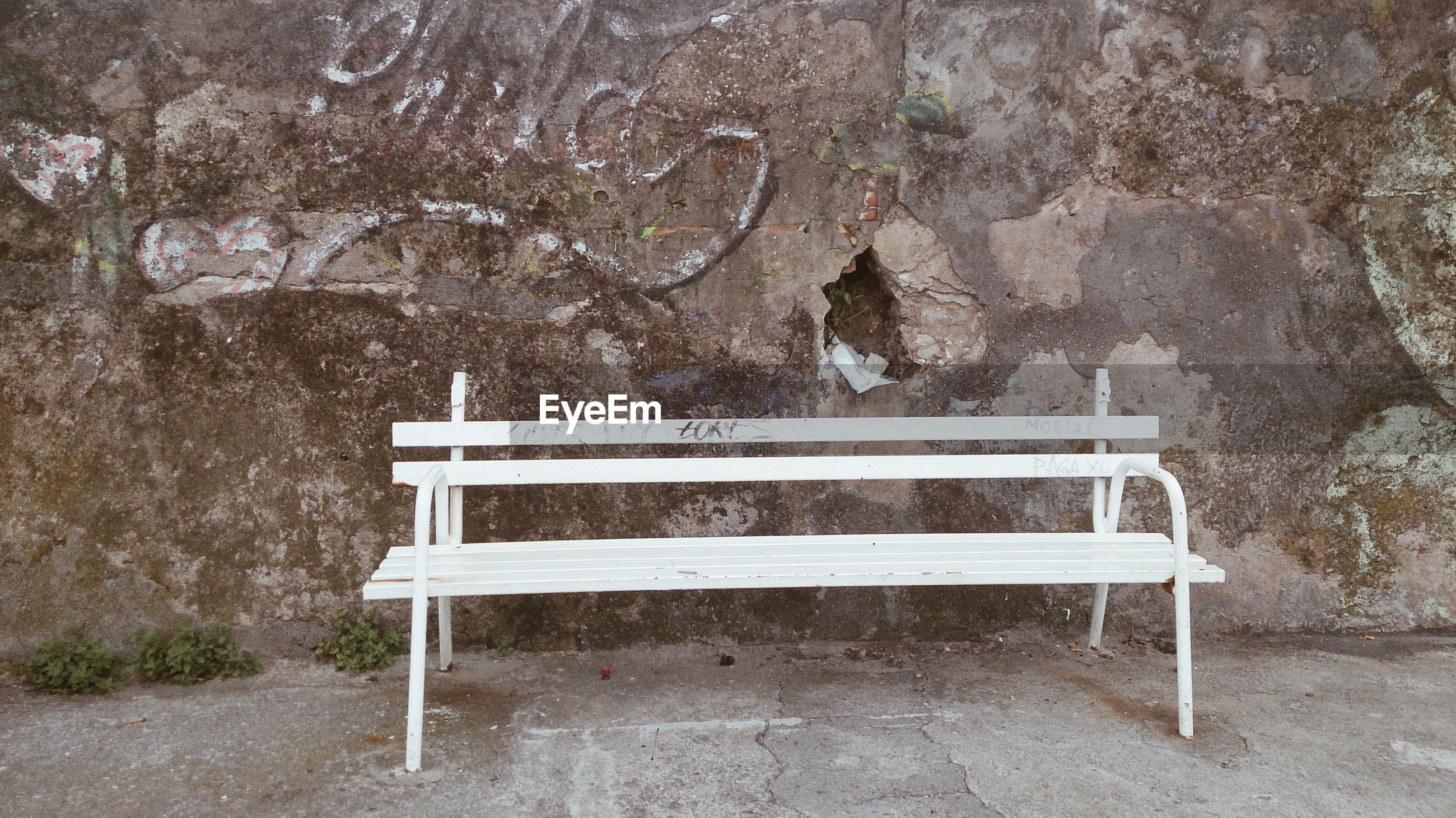 EMPTY SEAT AGAINST TREES