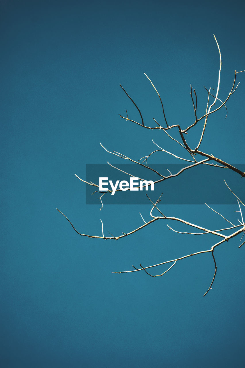 sky, blue, tree, beauty in nature, branch, plant, nature, bare tree, no people, tranquility, clear sky, low angle view, day, outdoors, copy space, dead plant, scenics - nature, tranquil scene, growth, bare, blue background