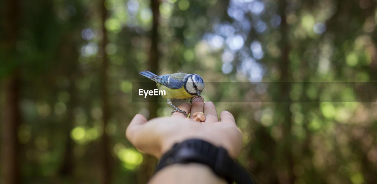 Close-Up Of Cropped Hand Feeding Bird