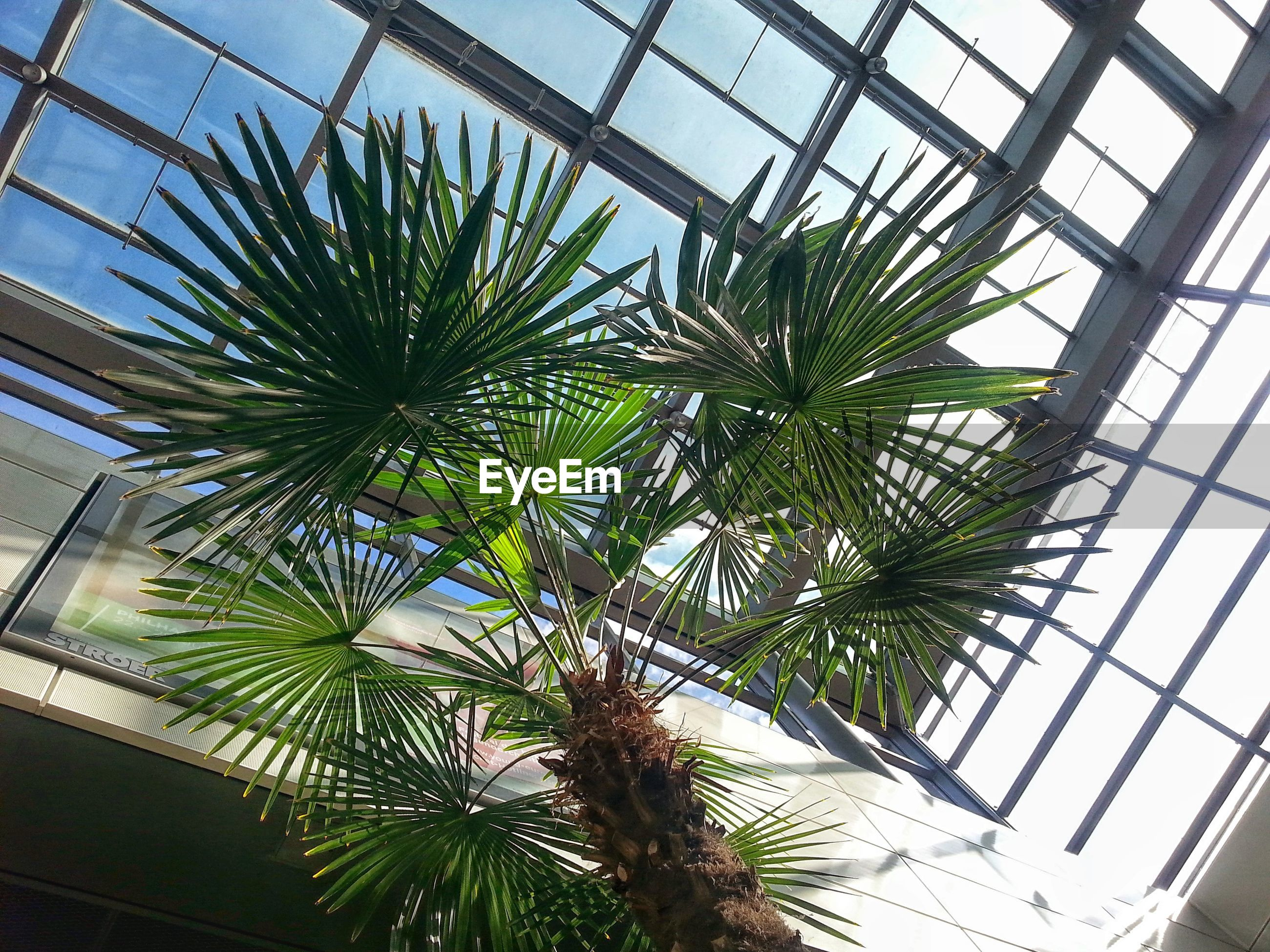 Low angle view of palm tree against skylight