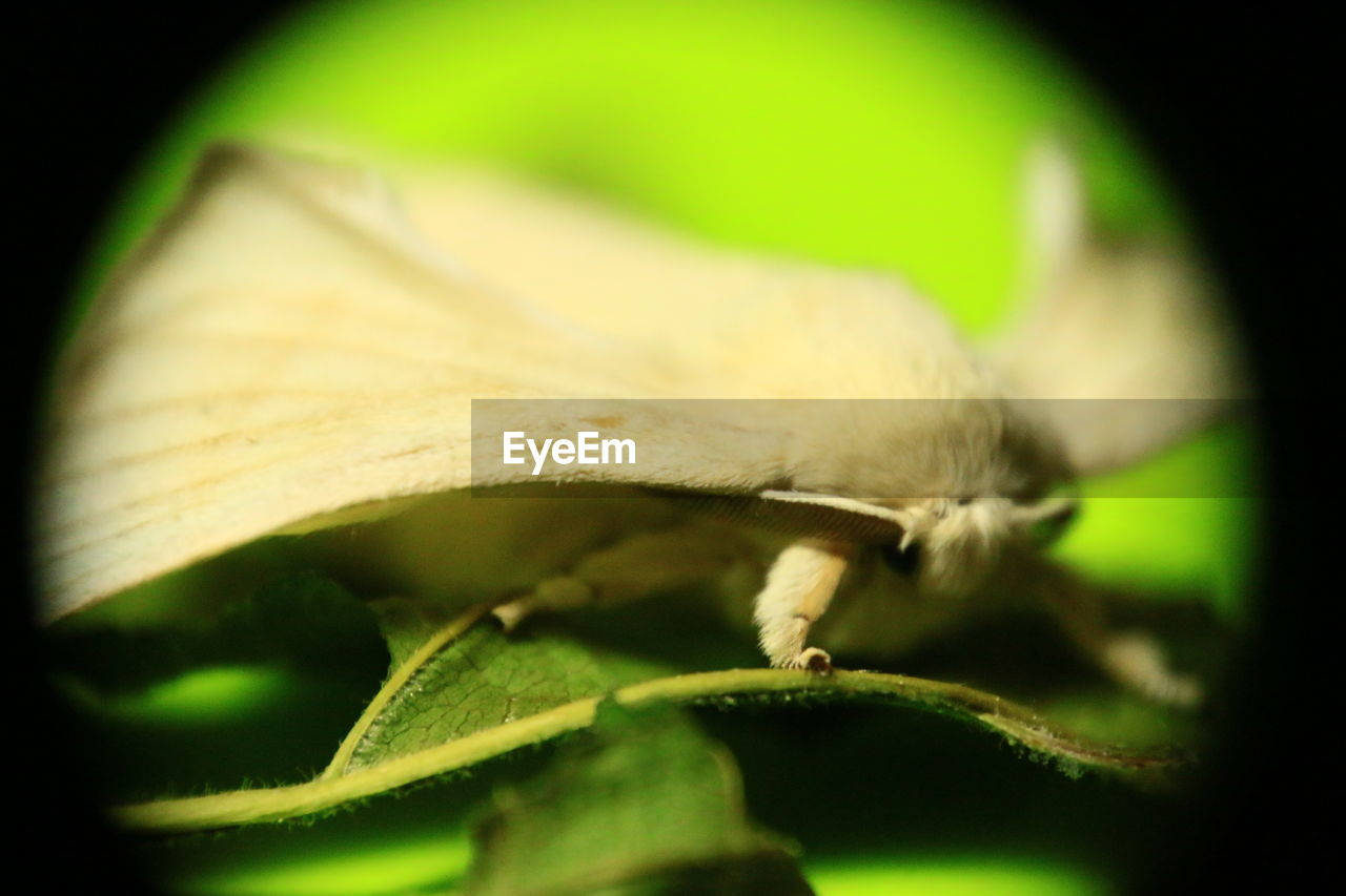 one animal, animal themes, leaf, animals in the wild, green color, close-up, no people, selective focus, nature, insect, night, outdoors
