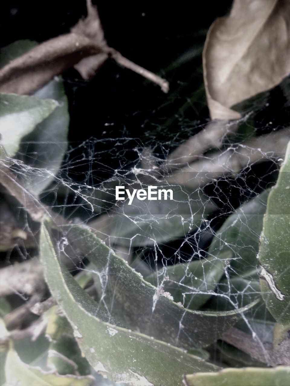spider web, web, close-up, fragility, spider, one animal, leaf, nature, insect, day, animal themes, focus on foreground, no people, outdoors, animals in the wild, beauty in nature, freshness