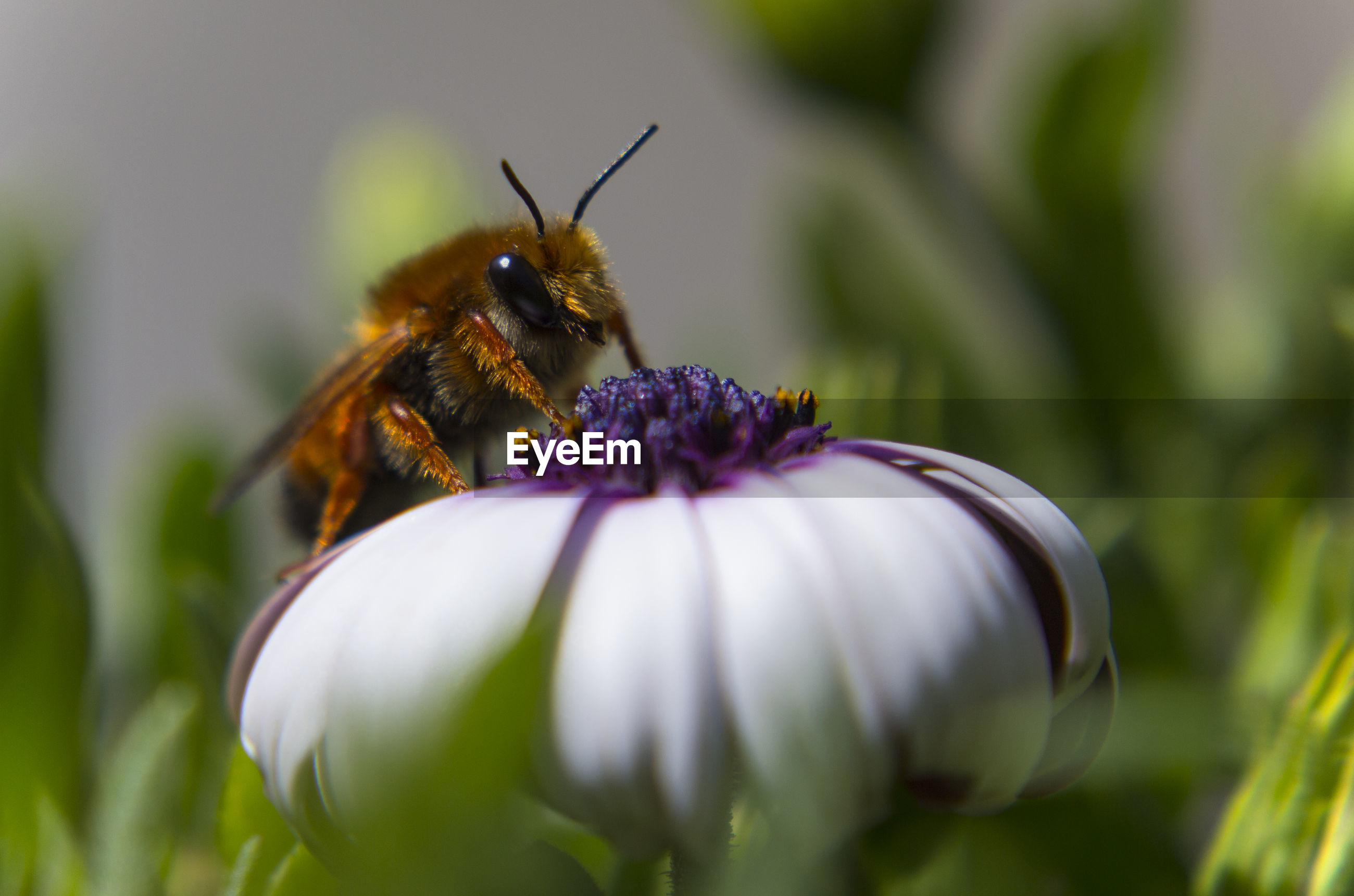 Bee pollinating on flower blooming outdoors