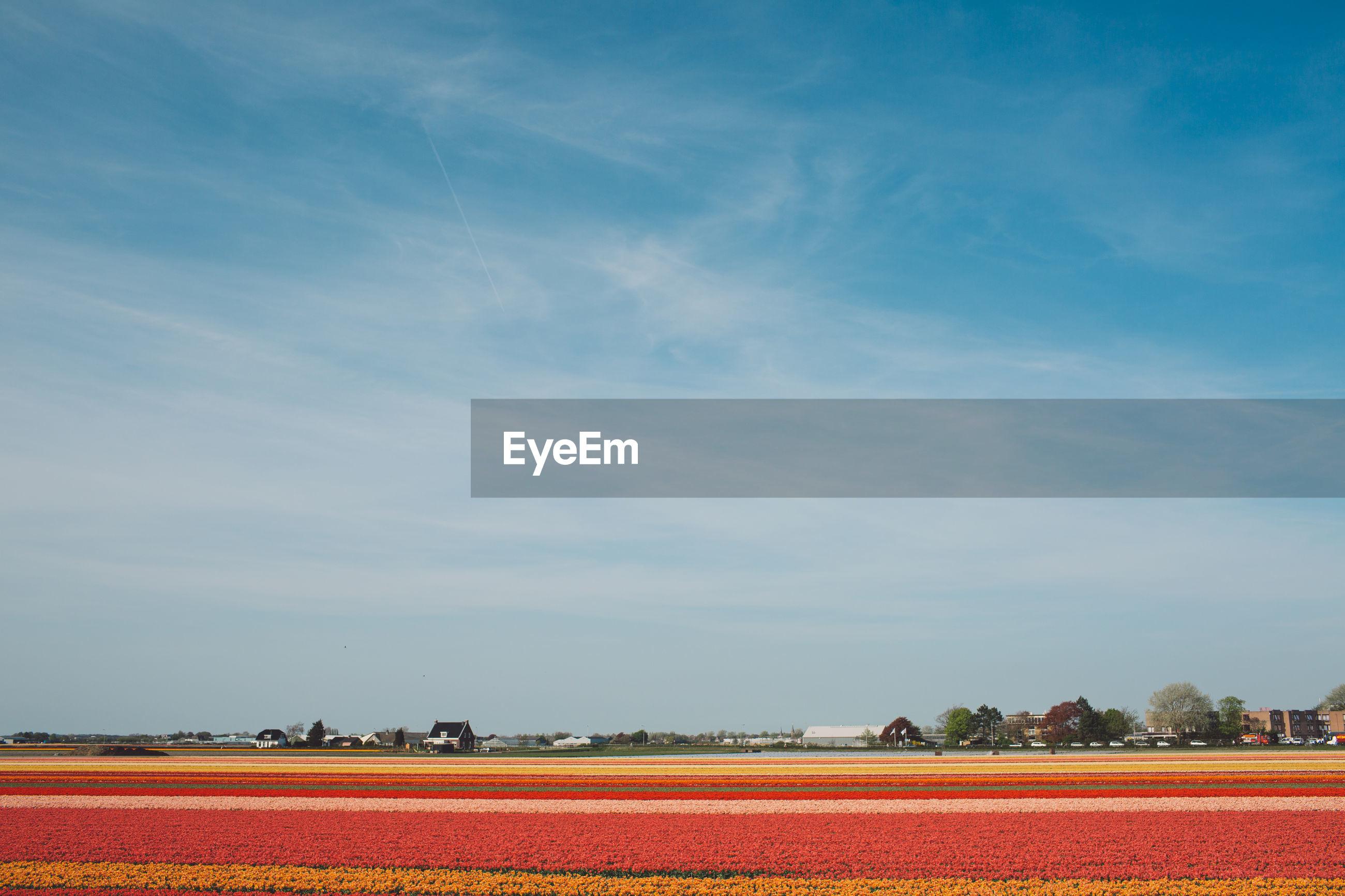 Flowerbed on field against sky