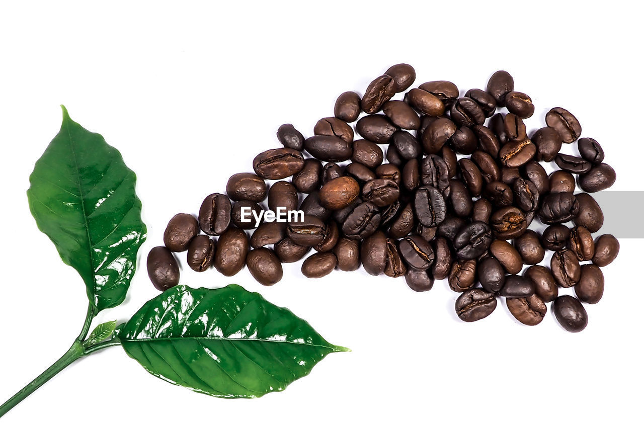 white background, studio shot, food and drink, coffee, large group of objects, freshness, food, indoors, coffee - drink, brown, close-up, roasted coffee bean, still life, high angle view, no people, leaf, coffee bean, plant part, directly above, abundance, caffeine