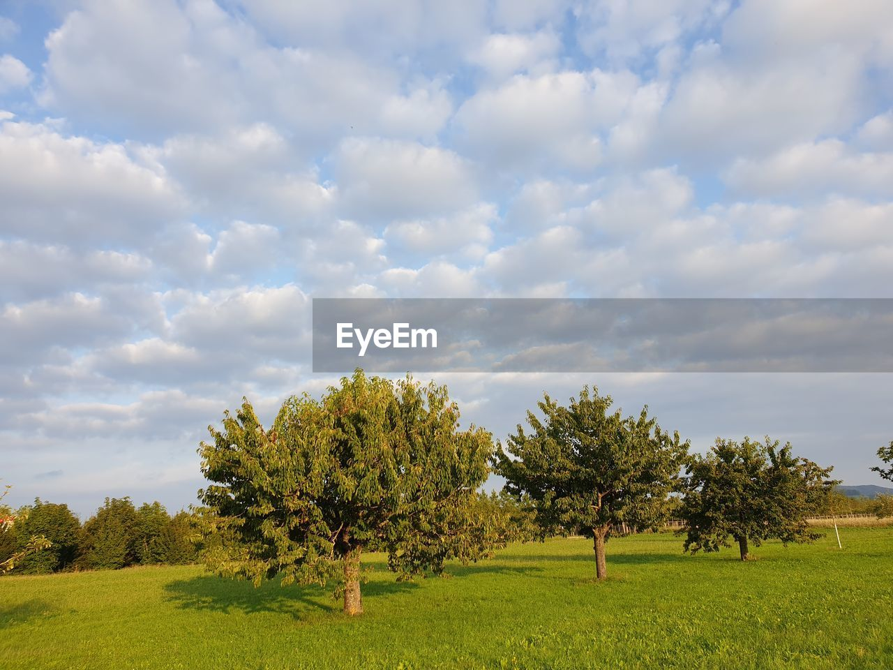 plant, tree, cloud - sky, beauty in nature, sky, landscape, environment, growth, land, tranquil scene, field, tranquility, scenics - nature, nature, grass, green color, day, non-urban scene, idyllic, no people, outdoors