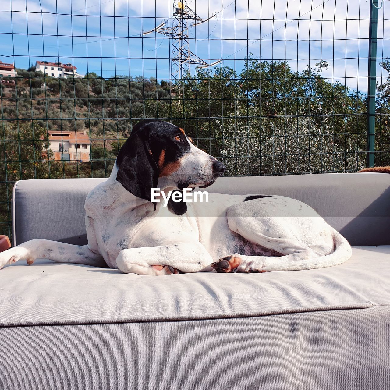 pets, domestic, domestic animals, animal themes, mammal, one animal, relaxation, canine, dog, animal, vertebrate, resting, no people, furniture, day, indoors, lying down, bed, looking, looking away