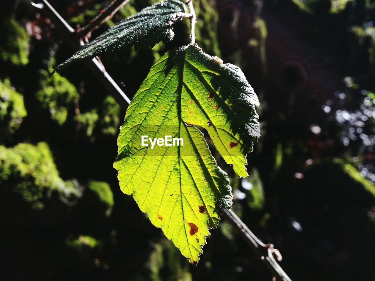 leaf, green color, nature, close-up, day, focus on foreground, outdoors, no people, growth, change, plant, beauty in nature, fragility, tree, animal themes