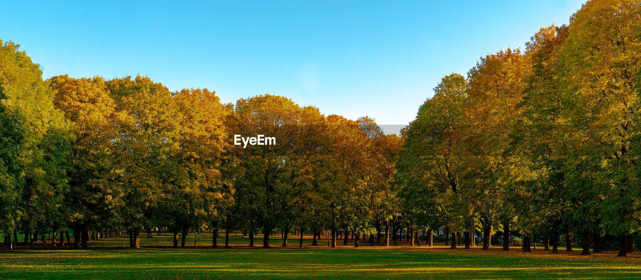 tree, plant, autumn, tranquility, beauty in nature, sky, tranquil scene, nature, change, green color, no people, growth, day, grass, scenics - nature, clear sky, field, land, environment, outdoors, fall