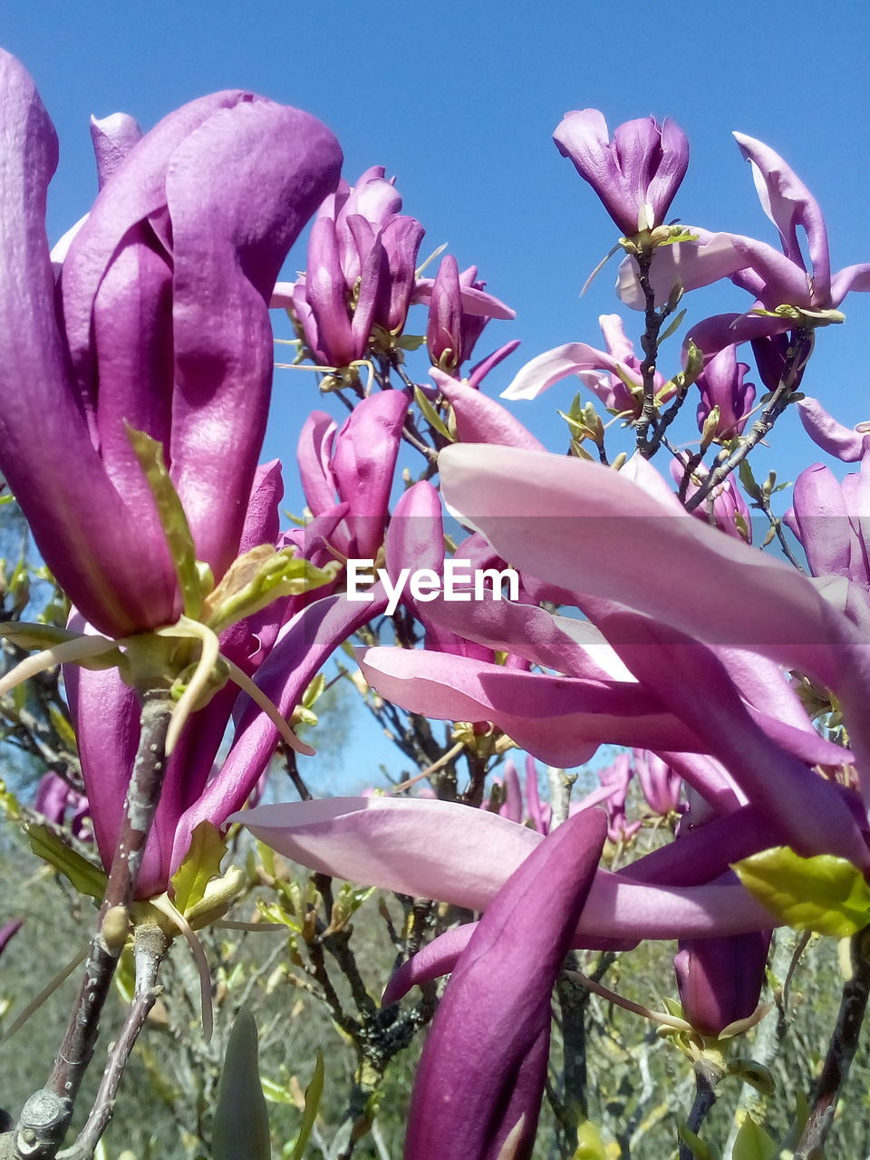 pink color, flowering plant, flower, plant, growth, freshness, vulnerability, fragility, beauty in nature, petal, close-up, nature, no people, day, flower head, springtime, inflorescence, blossom, botany, outdoors, purple