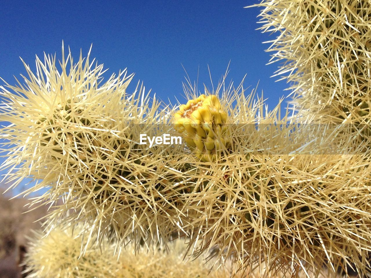 thorn, cactus, nature, growth, spiked, plant, beauty in nature, close-up, day, no people, flower, outdoors, clear sky, freshness, flower head, thistle