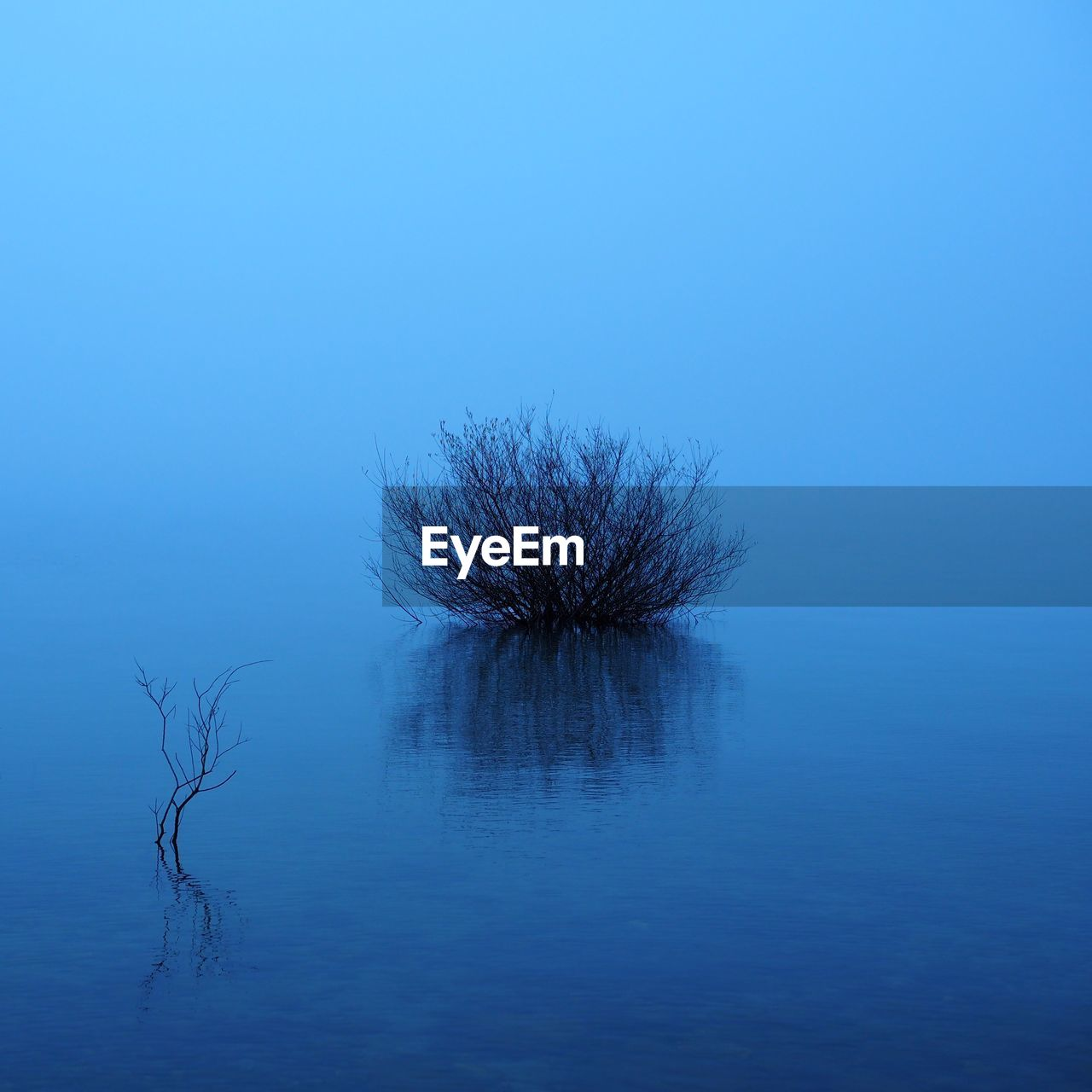 BARE TREE BY WATER AGAINST CLEAR SKY