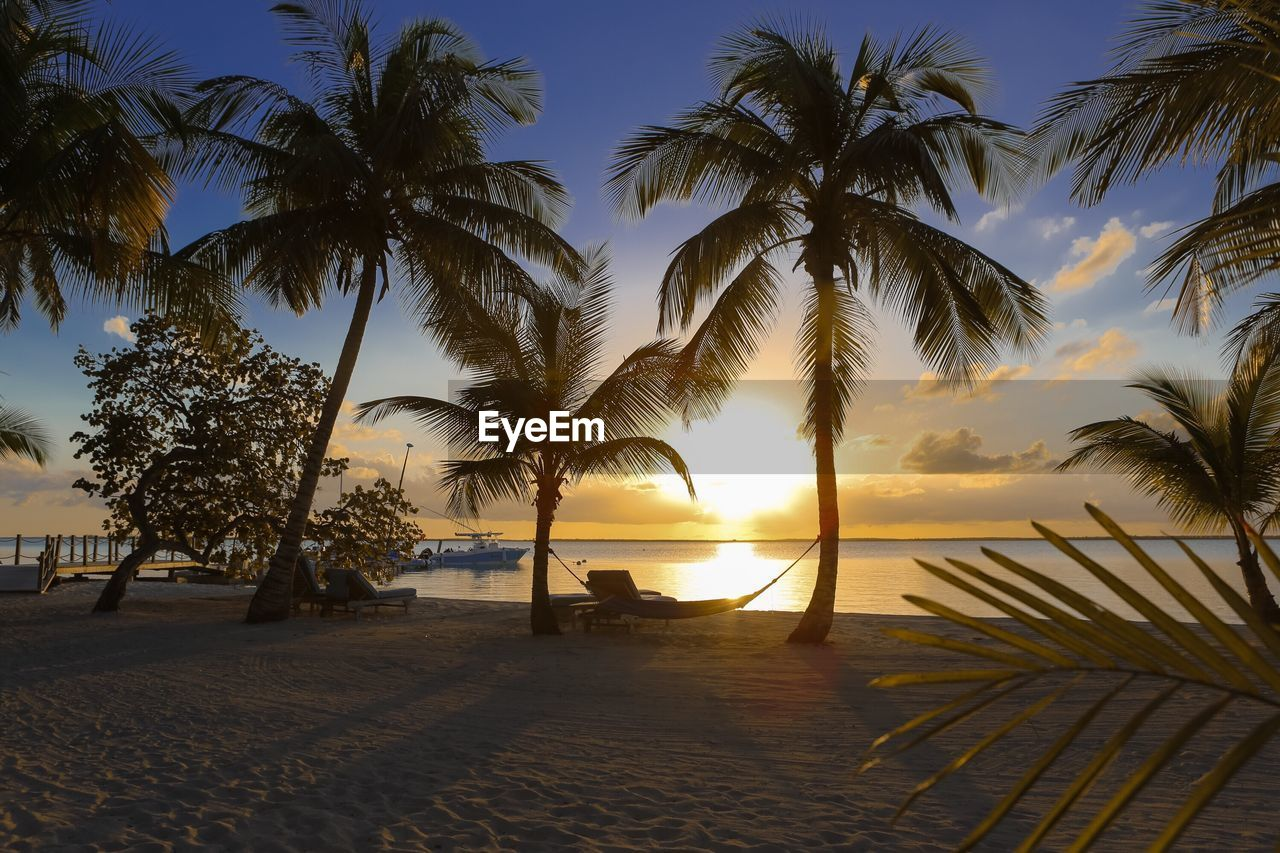 Hammock Hanging On Palm Tree At Beach During Sunset