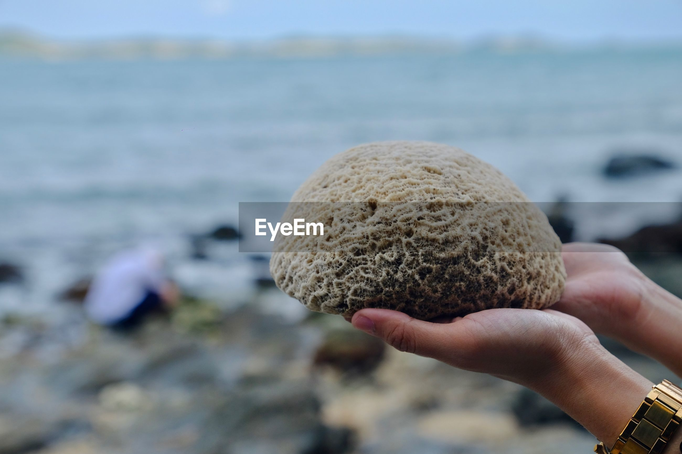 Close-up of cropped hands holding coral at beach