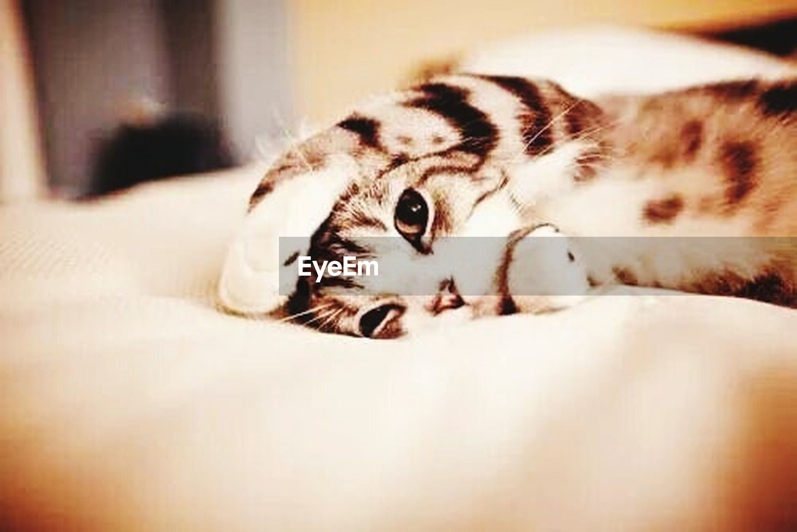 pets, domestic animals, indoors, animal themes, one animal, mammal, relaxation, resting, domestic cat, lying down, sleeping, bed, cat, feline, home interior, close-up, selective focus, whisker, comfortable, relaxing