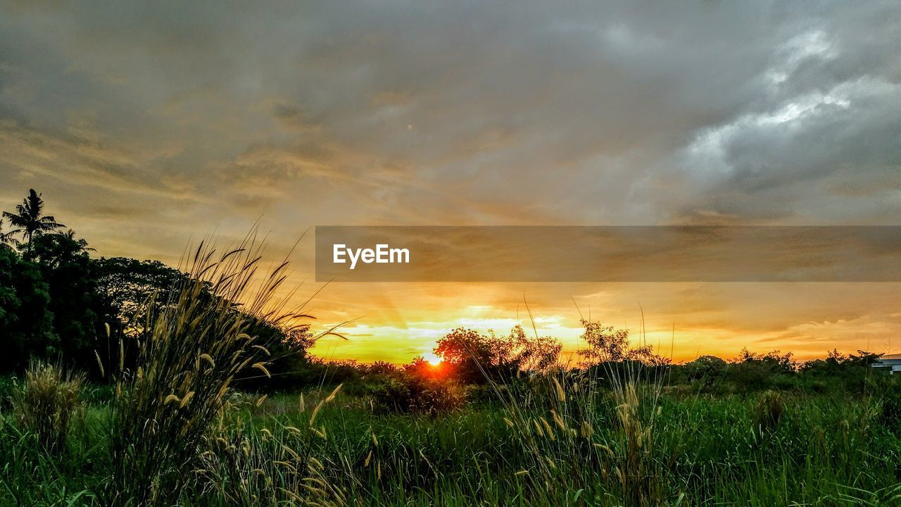 sunset, tranquil scene, nature, grass, scenics, beauty in nature, tranquility, cloud - sky, sky, field, orange color, dramatic sky, no people, growth, landscape, outdoors, plant, tree, day