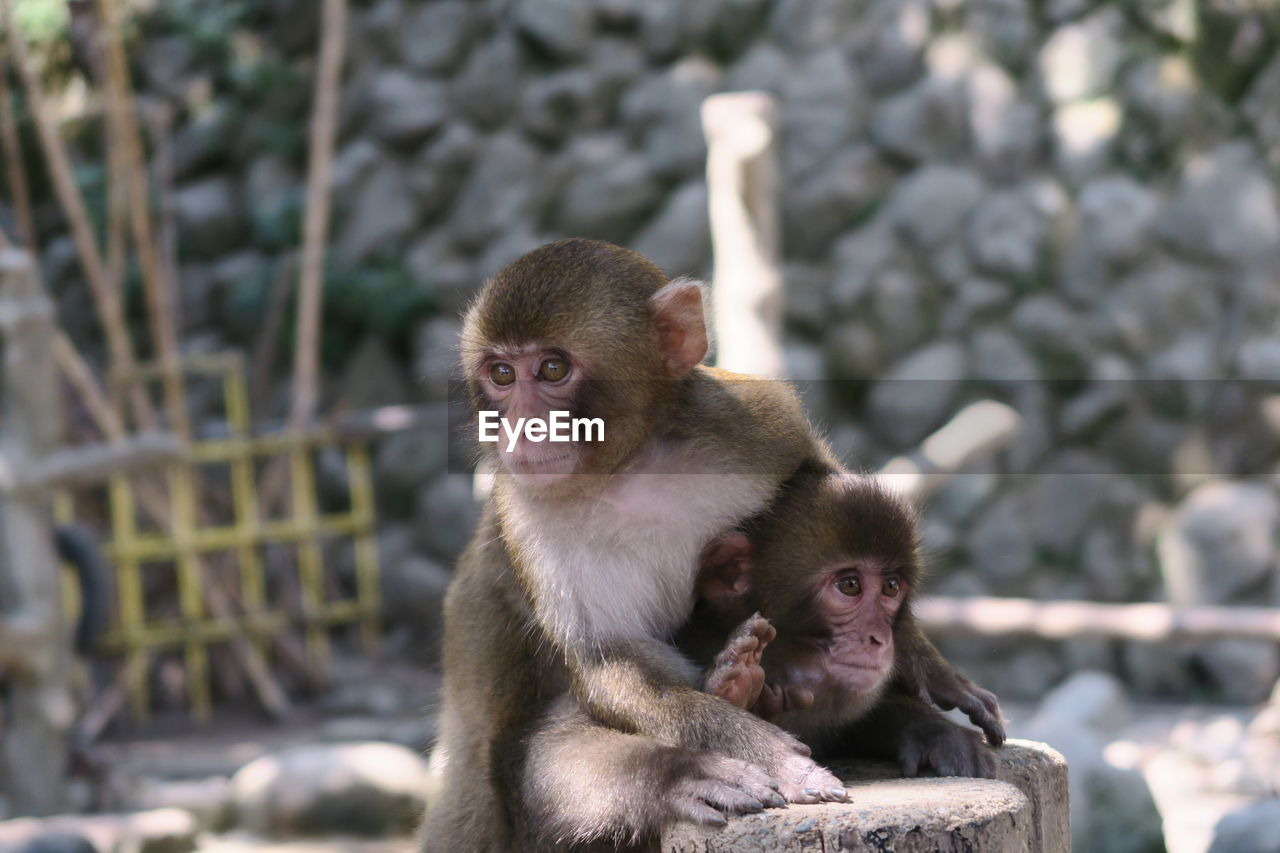 Monkey Outdoors